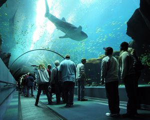 Georgia Aquarium Tickets for Sale in Atlanta, GA