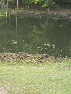 Pond muck for Sale in Mayville, MI