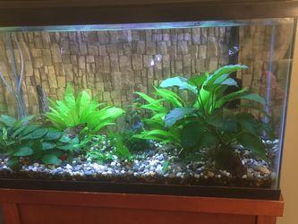 Fish Tank / Aquarium for Sale in Bakersfield,  CA