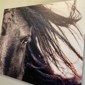 Horse Photo for Sale in Snohomish, WA