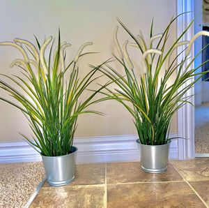 2 Beautiful Plant Set for Sale in Covina, CA