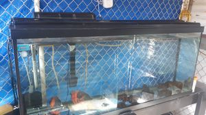 55 gallon aquarium for Sale in Wahiawa, HI