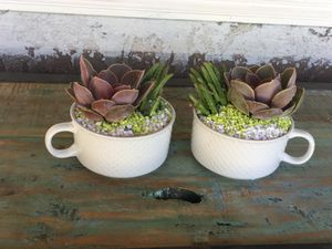 """Beautiful Cups"""" with succulent $12 each or $20 for both for Sale in Fontana, CA"""