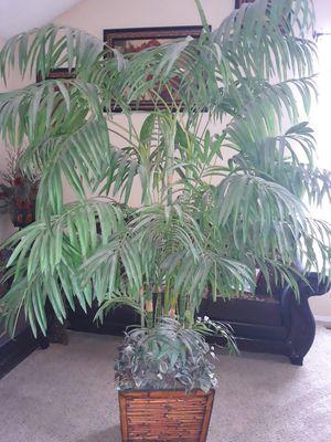 Fake plant for Sale in Denver, CO