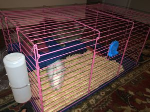 Rabbit Cage for Sale in Charlotte, NC