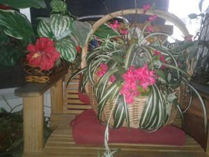 Fake plants for Sale in Lakeland, FL