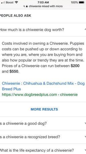 Chiweenie puppy for Sale in St. Louis, MO
