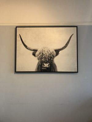 Bull Photography Wall Art for Sale in San Francisco, CA