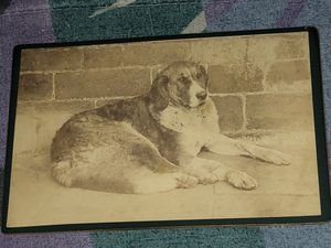 19th CENTURY CABINET CARD PHOTOGRAPH Of A DOG for Sale in The Bronx, NY
