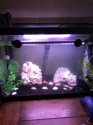 20g aquarium for Sale in Dallas, TX