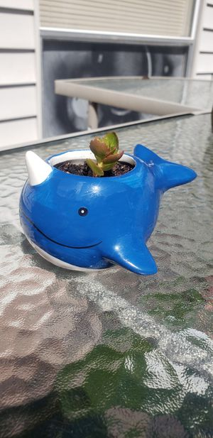 FLAMING KATY KALANCHOE PLANT IN A NARWHAL POT for Sale in Spring, TX