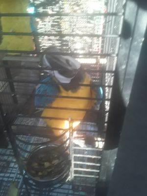 BIG CAGE FOR SALE ANY QUESTIONS FEEL FREE TO ASK SERIOUS BUYERS ONLY FIRM PRICE for Sale in Santa Ana, CA