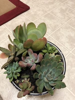 $35 - Cactus Succulent Garden House Plants for Sale in East Point, GA