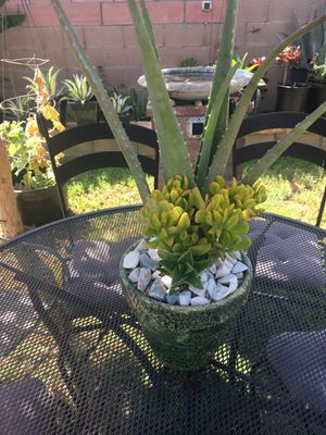 Rustic centerpiece with alovera and jade plant for Sale in Fontana, CA