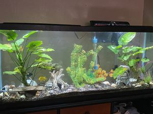 Fish tank 100 Gallon for Sale in Bellflower, CA