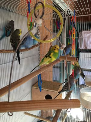 Bird Cage for Sale in Galt, CA