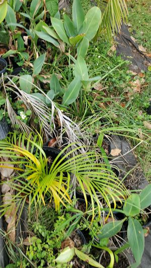 Various potted plants for Sale in NW PRT RCHY, FL