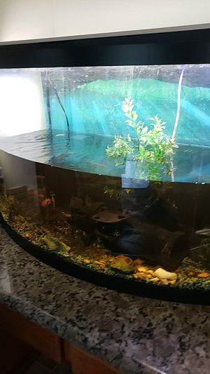 Fish tank for Sale in Beaverton, OR