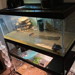 Turtle /Turtle Accessories & Tank for Sale in Cleveland,  OH