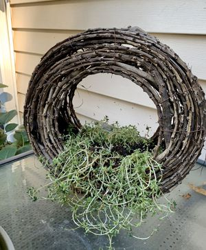 Succulents in twig wreath for Sale in Auburn, WA