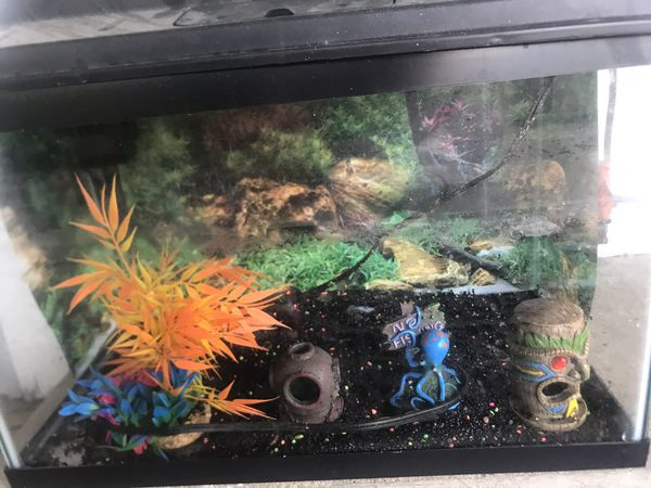 Fish tank with filter, hood light, gravel and decorations over $100 value just got it few weeks ago. Kids didn't want fish