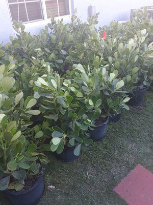 Crussia for Sale in Miami, FL