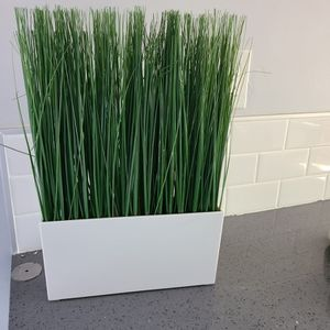 Fake Plant for Sale in Long Beach, CA