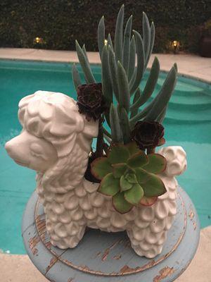 Succulent plants for Sale in Fullerton, CA
