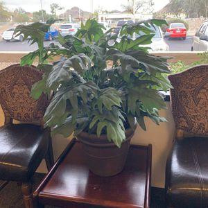Plant for Sale in Phoenix, AZ