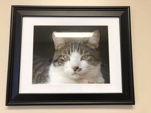 Professional cat picture for Sale in East Moline, IL