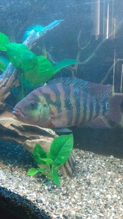 Fish needs home for Sale in Modesto,  CA