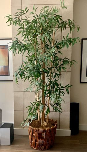Artificial bamboo house plant for Sale in San Diego, CA