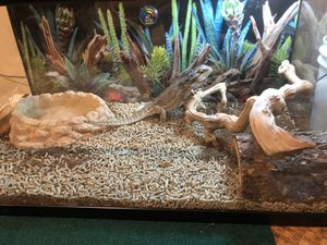 Reptile home message me for details for Sale in Los Angeles, CA