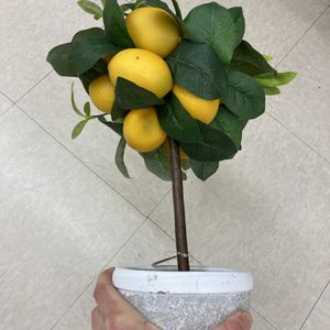 Decorative artificial lemon tree topiary for Sale in Hinsdale, IL