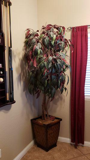 Free large tree for Sale in Buckeye, AZ