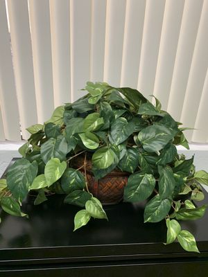 Woven bamboo basket with plant for Sale in Tempe, AZ