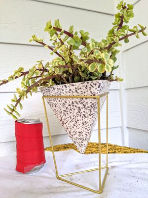 Rainbow Elephant Bush Succulent Plants in Triangular Pyramid Ceramic Planter Pot with Stand-Real Indoor House Plant for Sale in Auburn, WA