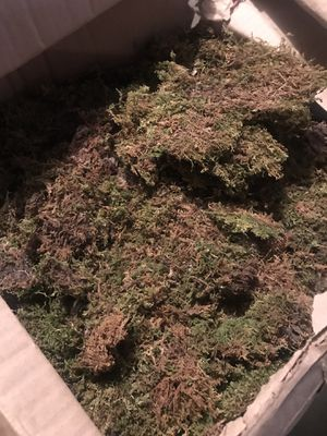 Large box of moss for crafting projects for Sale in Milwaukie, OR