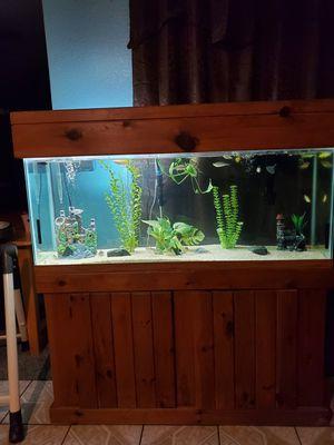 55 gallon community fish tank aquarium for Sale in Dinuba, CA