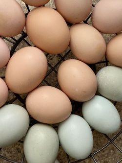 Fresh Farm Eggs 🥚 for Sale in Hialeah,  FL