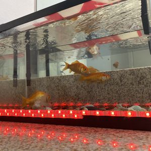 Fishes With Fish Tank for Sale in Santa Ana, CA