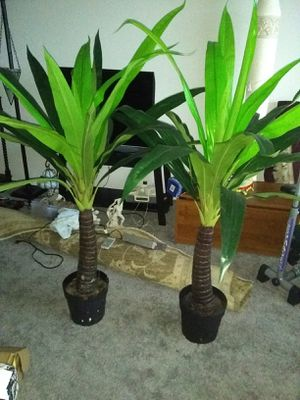 2 artificial trees about 60 tall$20 each for Sale in Alexandria, VA