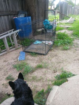 Xl dog crate for Sale in San Angelo, TX
