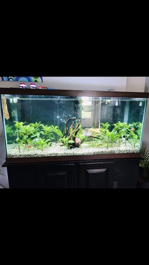 90 gallon fishtank with stand ,glass tops and fluval 406 canister filter for Sale in Lakewood, OH