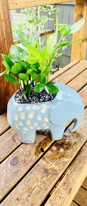 Live indoor ZZ house plant in a ceramic elephant planter flower pot—firm price for Sale in Seattle, WA