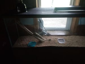 55 gallon reptarium tank with all lights and heat lamp for Sale in Bloomington, IL