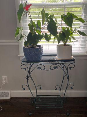 Plants and plants holder for Sale in Manassas, VA
