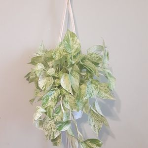Golden pothos With Macrame for Sale in Long Beach, CA