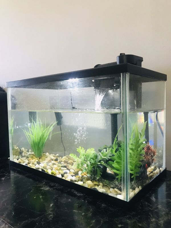 Aquarium & Tetra Fish (free things included)