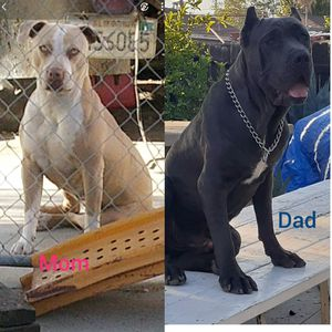 Cagess!!! for Sale in Ontario, CA